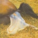 A Guide to Foaling Your Mare – From Foetus to Foal!