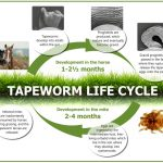 Tapeworm infections: why we need to pay special attention to these parasites