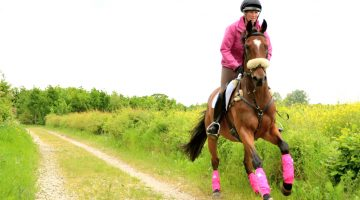 Victoria Bax – Retraining The Racehorse