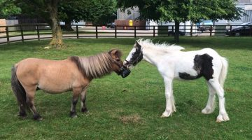 Blue Cross saves abandoned foals