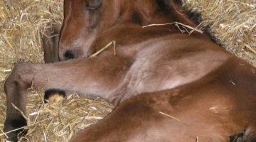 Don't be complacent this winter – Research your horse bedding and get the best!