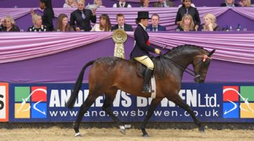 Top Tips on Training the Show Horse with Michaela Wood
