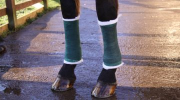 Practical Bandaging Advice From Robinson Animal Healthcare