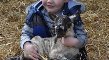 Walford Spring Lambing Day Planning Underway