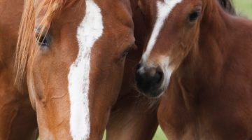 An Introduction to Artificial Insemination – Part 1