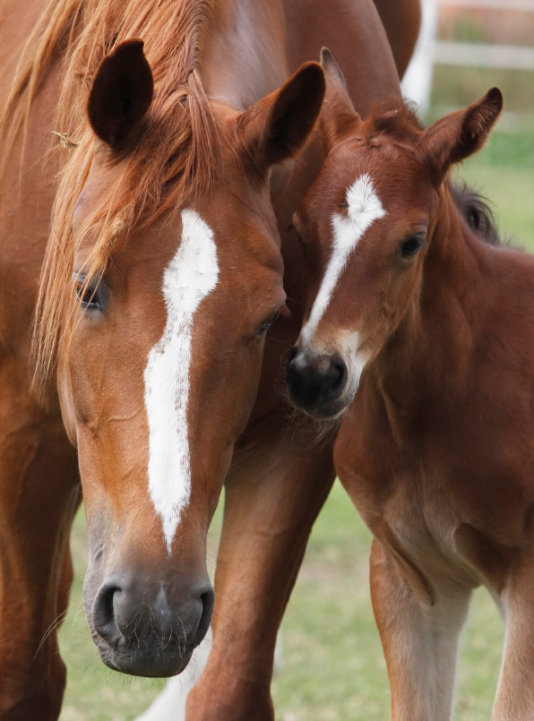 An Introduction To Artificial Insemination Part 1
