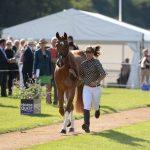 Hiho Silver to sponsor best dressed at Burghley's first trot up!