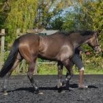 David Britnell – I Decided To Buy A Racehorse!