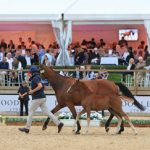 The Equerry Bolesworth International Horse Show Elite Auction 2018 – Can Records Be Broken?