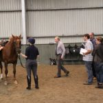 Society of Master Saddlers' Introductory Course in Saddle Fitting