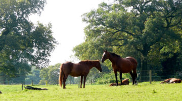Here's how you can keep your horse hale and hearty