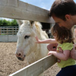 Bransby Horses reveals plans for their Summer Fayre
