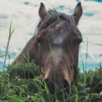 'Grow Your Own' for a Healthier Horse