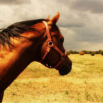 Brian Seddon, Equine Solutions – Remote or distance horse riding and coaching
