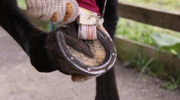 Hoof Care from Robinson Animal Healthcare