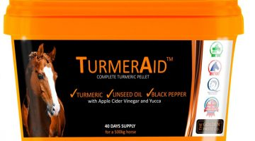 Support Your Horse this Summer with a Natural Turmeric Supplement