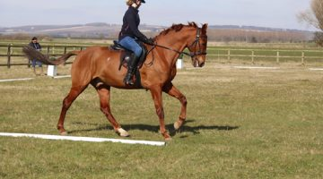Dressage Accuracy with Harriet Morris-Baumber